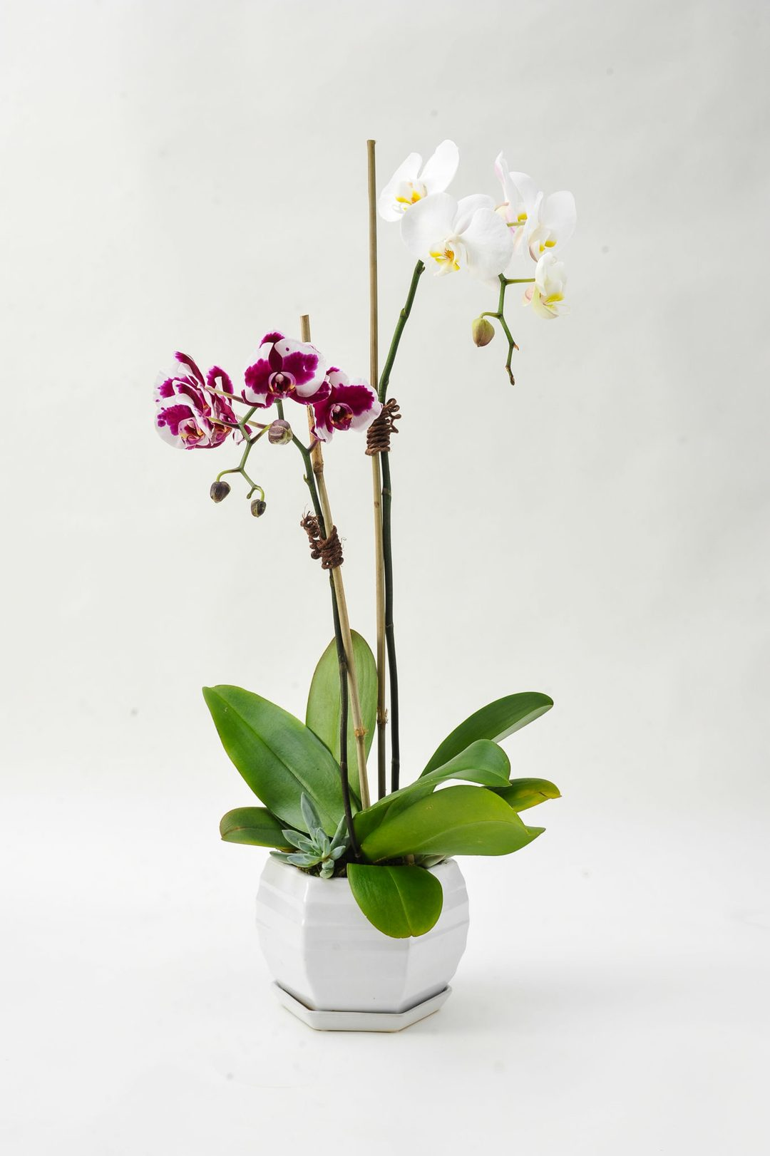 Julia Testa orchid delivery New York City