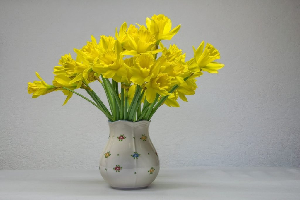 Daffodils March Birth Flower