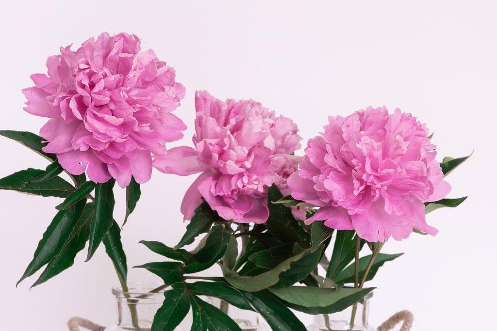 Birthday peonies flowers