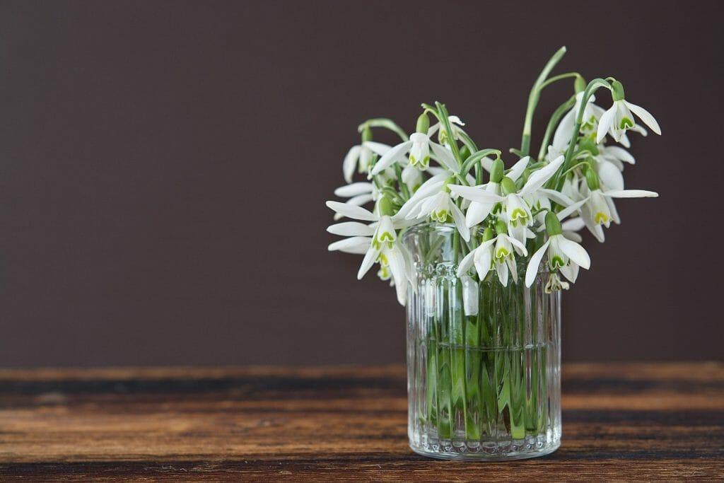 Snowdrop January Birthday Flower
