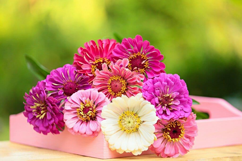 Mixed Gerbera Daisy bouquet