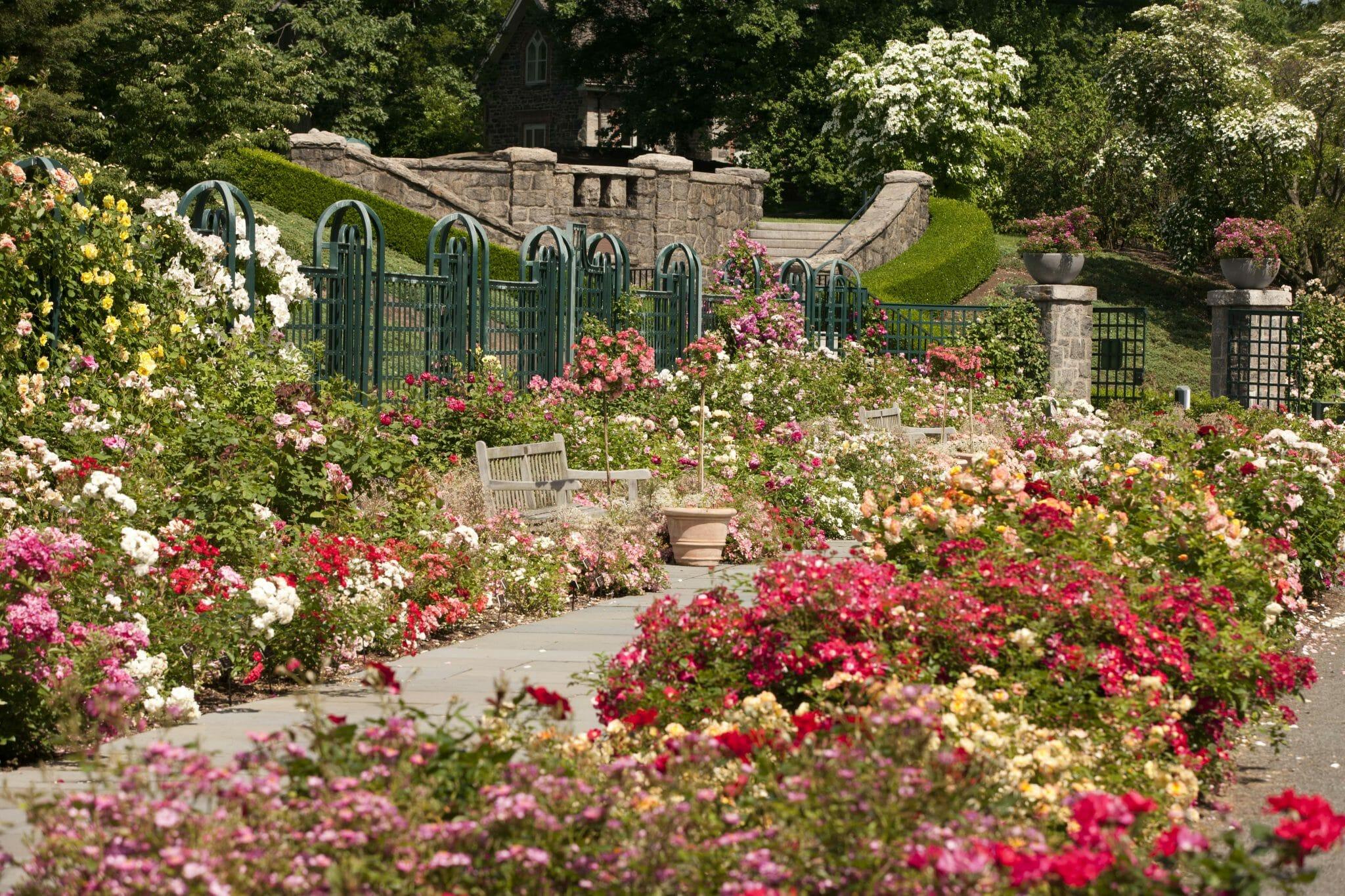 New York Botanical Garden Roses