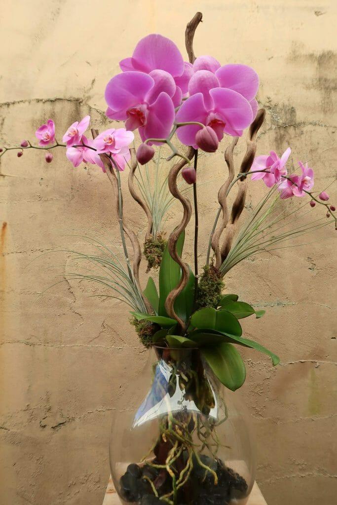 Avant Gardens Orchid Delivery Miami