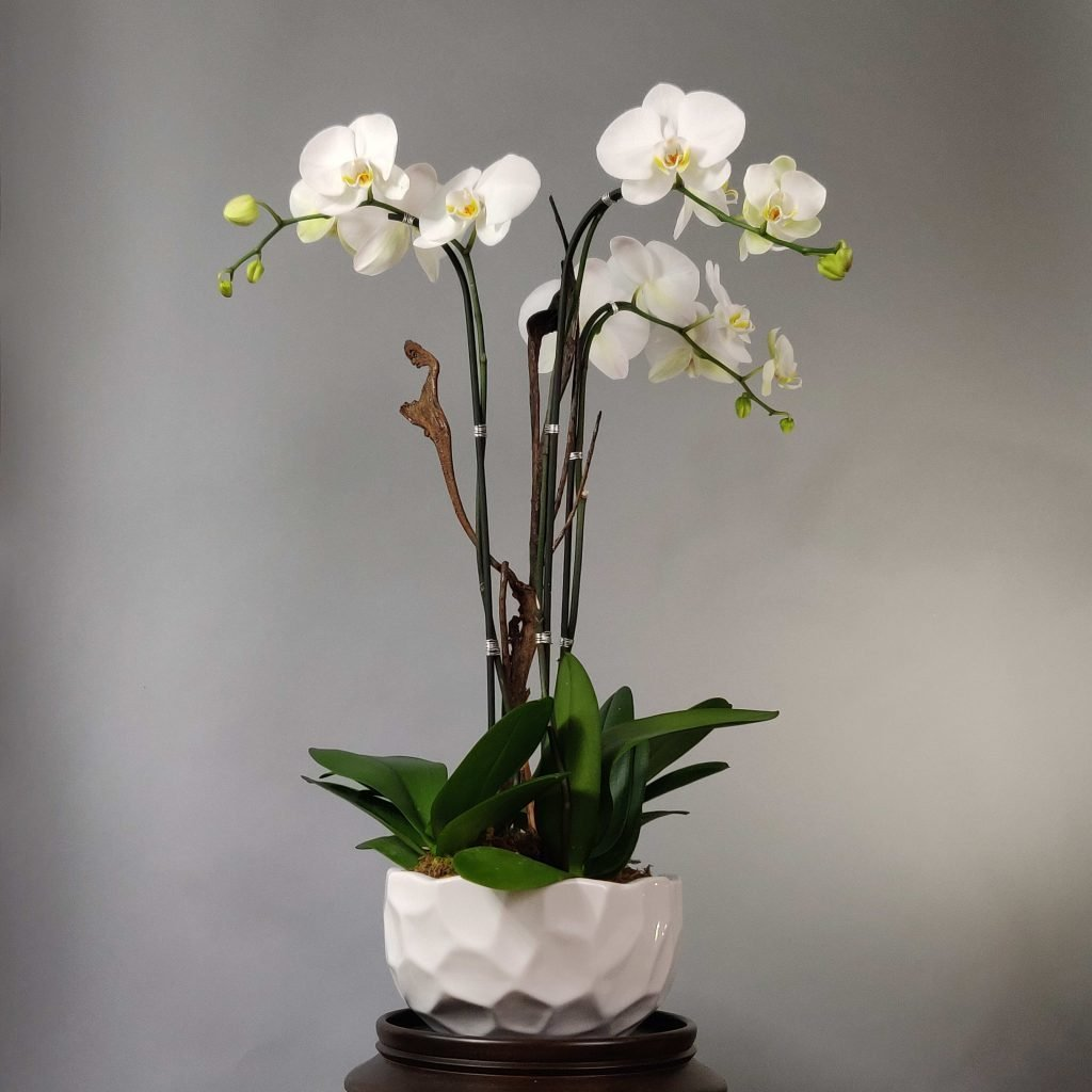 Boutique Orchid Miami
