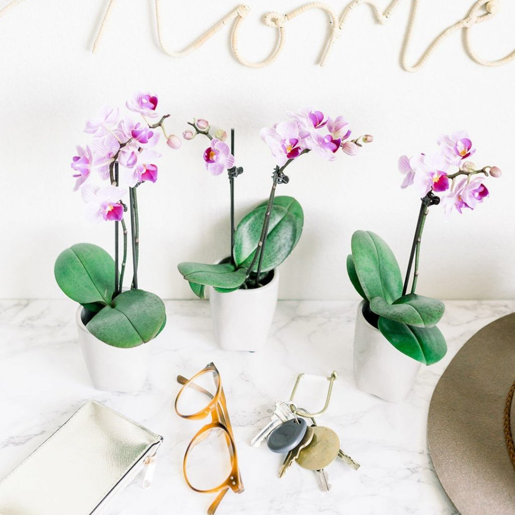 FromYouFlowers Orchid Delivery Los Angeles