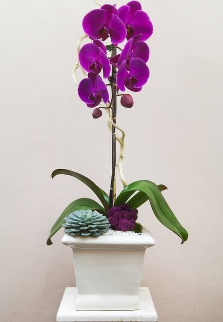 Lee's Orchids Los Angeles Delivery