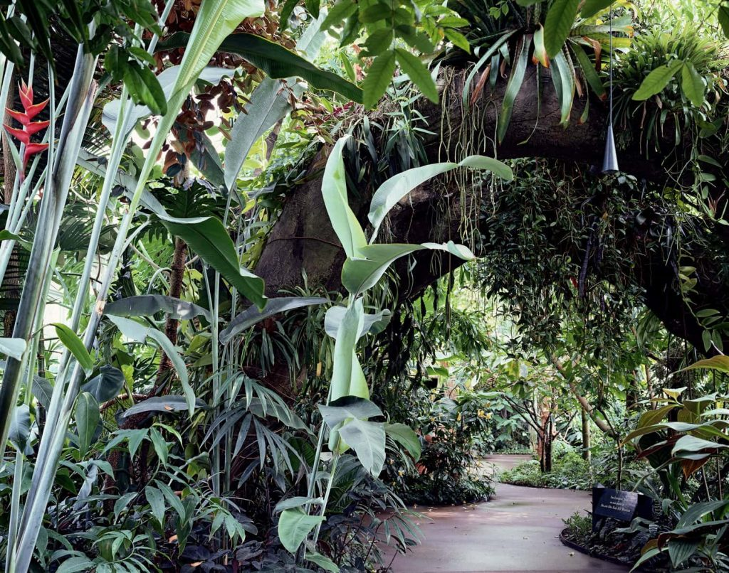 New York Botanical Garden Lowland Tropical Rainforest