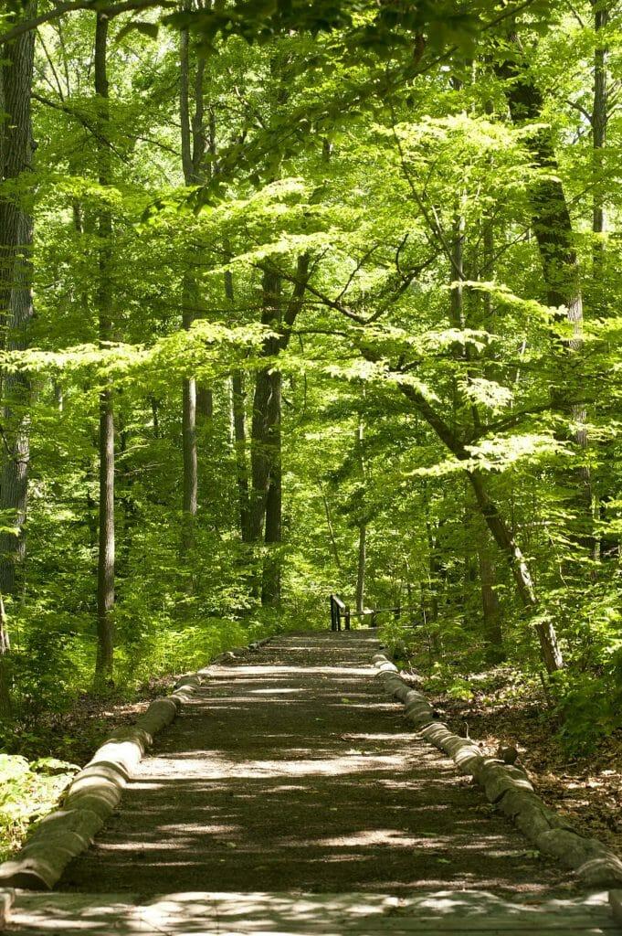 New York Botanical Garden Thain Family Forest