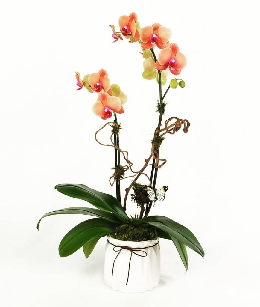 Natural Orchids Boutique Miami