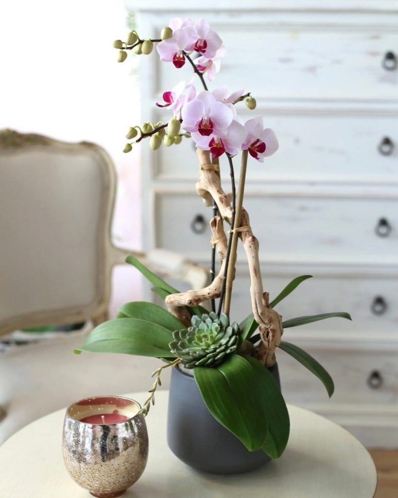 Orchid Republic Orchid Delivery Los Angeles