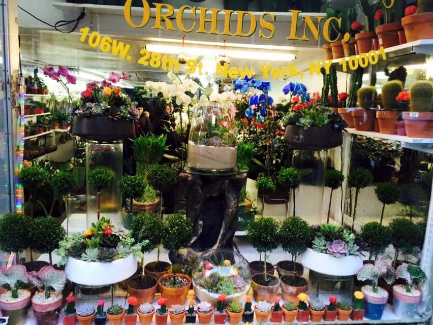 Tropical Plants & Orchids New York City Flower District