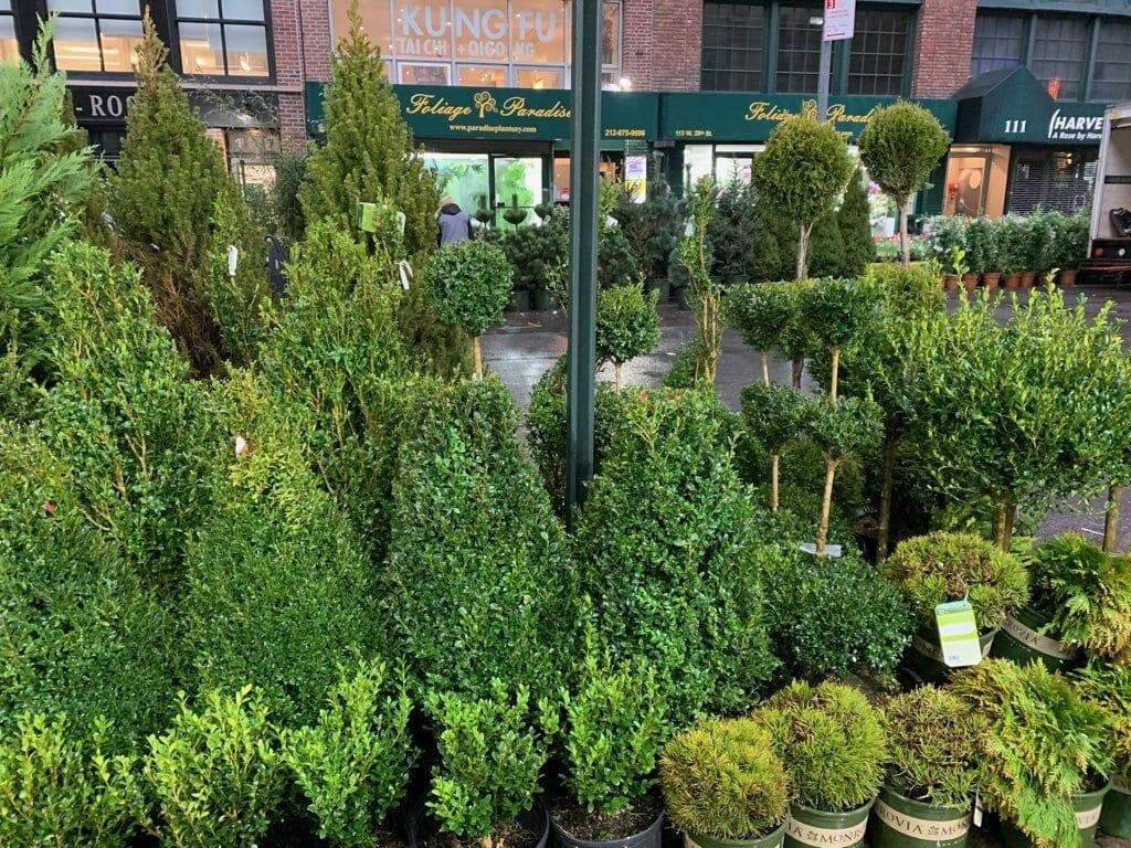The New York City Flower Market