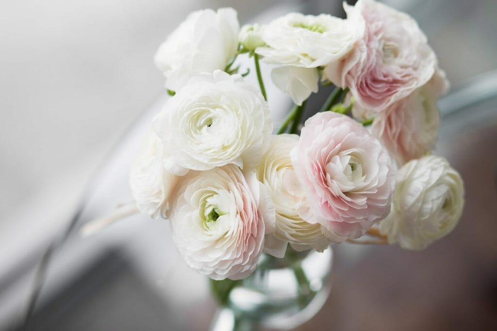 Ranunculus Flowers 'Bloomingdale'
