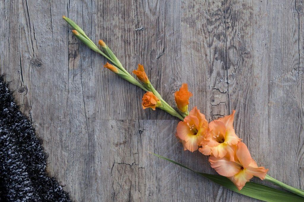Gladiolus Flower Characteristics