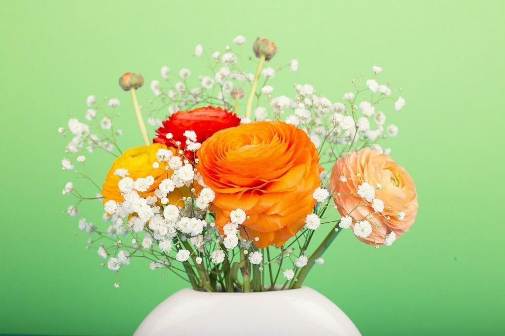 Ranunculus flowers in vase