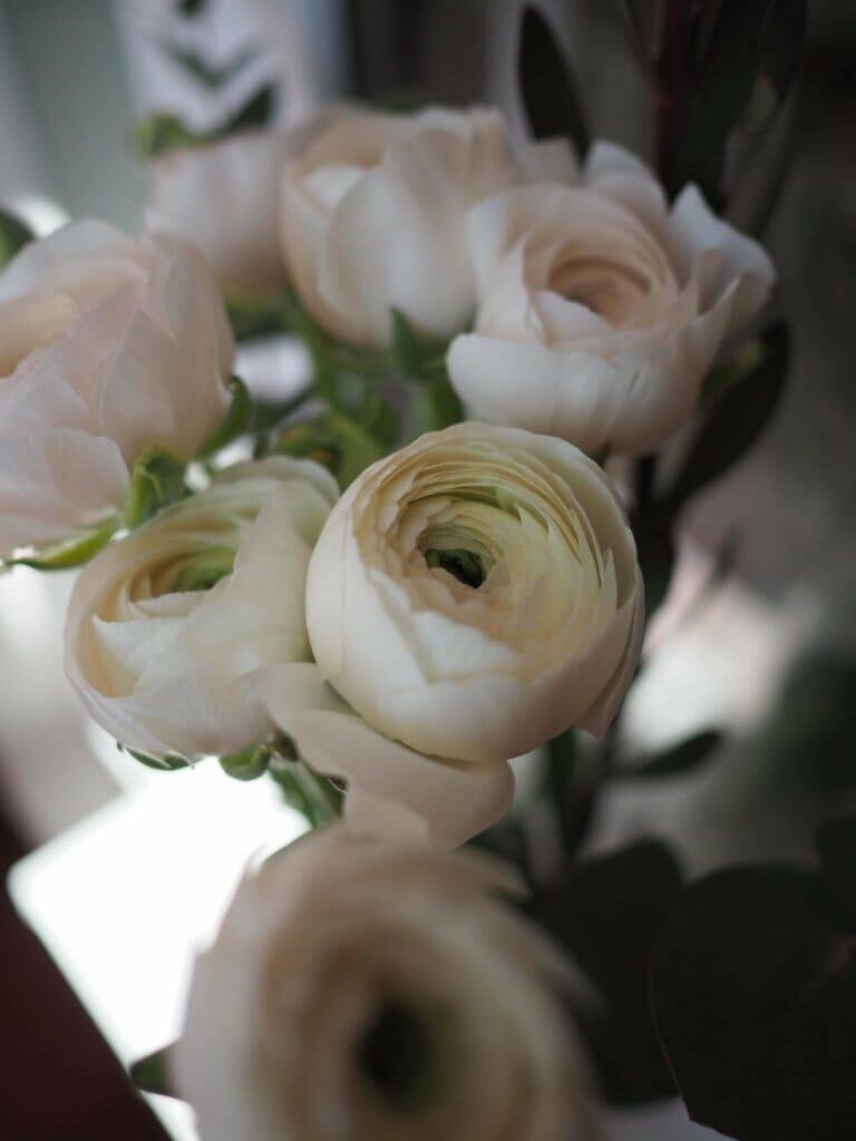 Ranunculus Flowers 'Hanoi'
