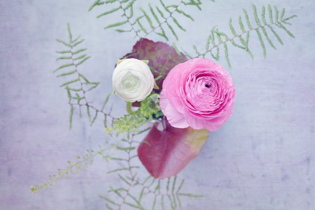 Ranunculus flowers buying tips