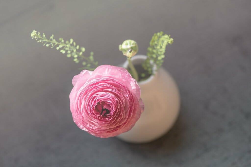 Ranunculus flowers gifting