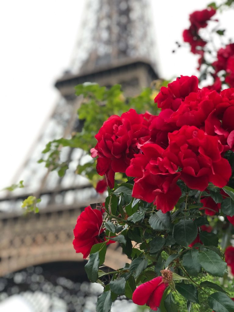 Adriane M. flower delivery to Paris, France
