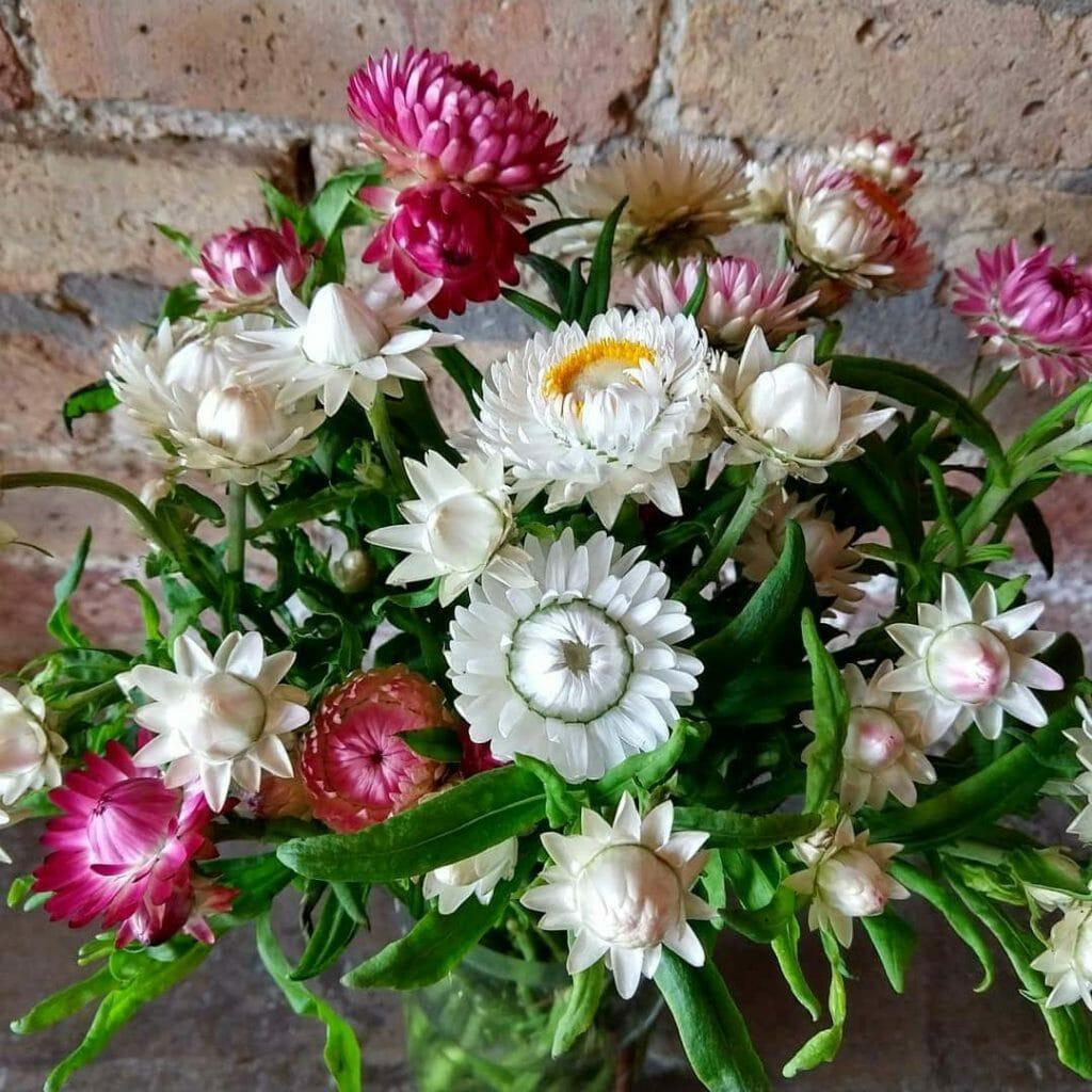 Larkspur Chicago Flower Delivery