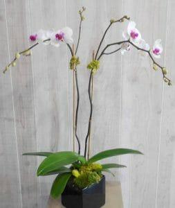 Petals and Stems Florist Dallas, Texas