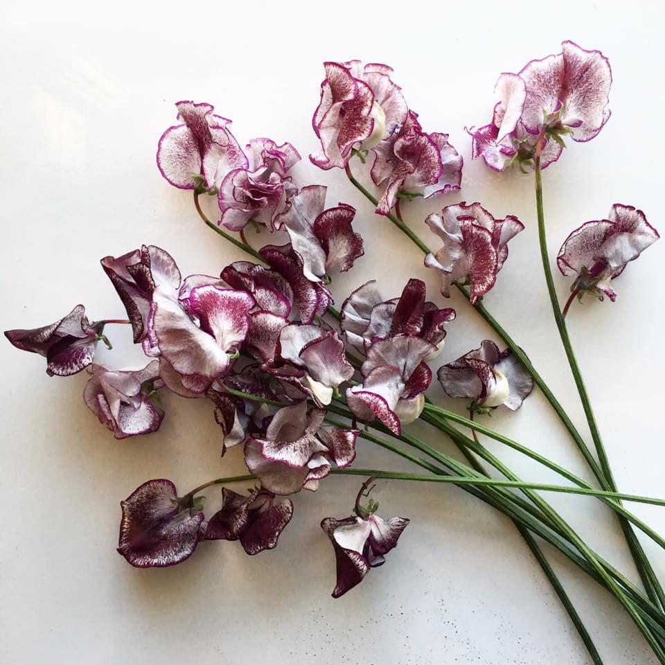 Plum Sage Flowers Flower delivery to Denver