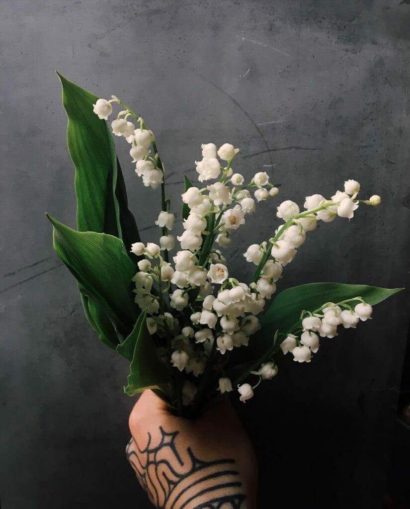 Sacred Thistle Flower Delivery to Denver