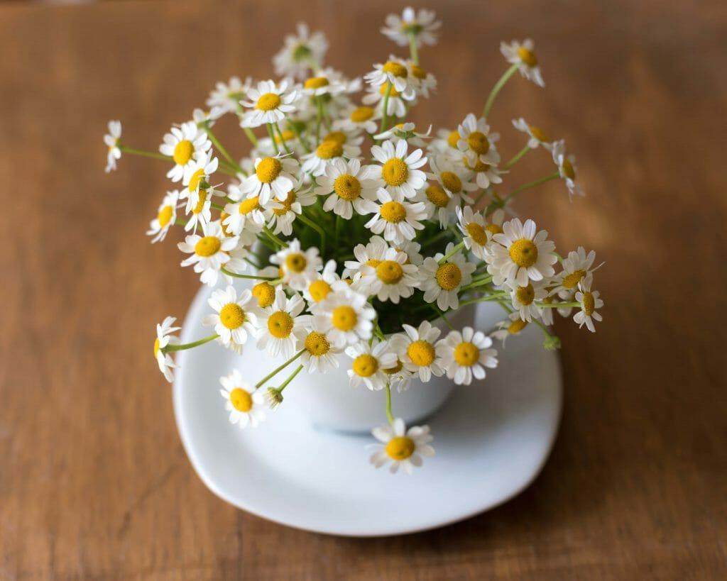Daisy Flower Arrangement April Birthday Flowers