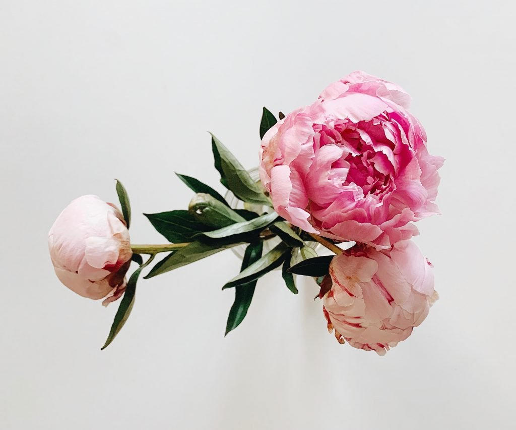 Peonies Birthday Flowers for May