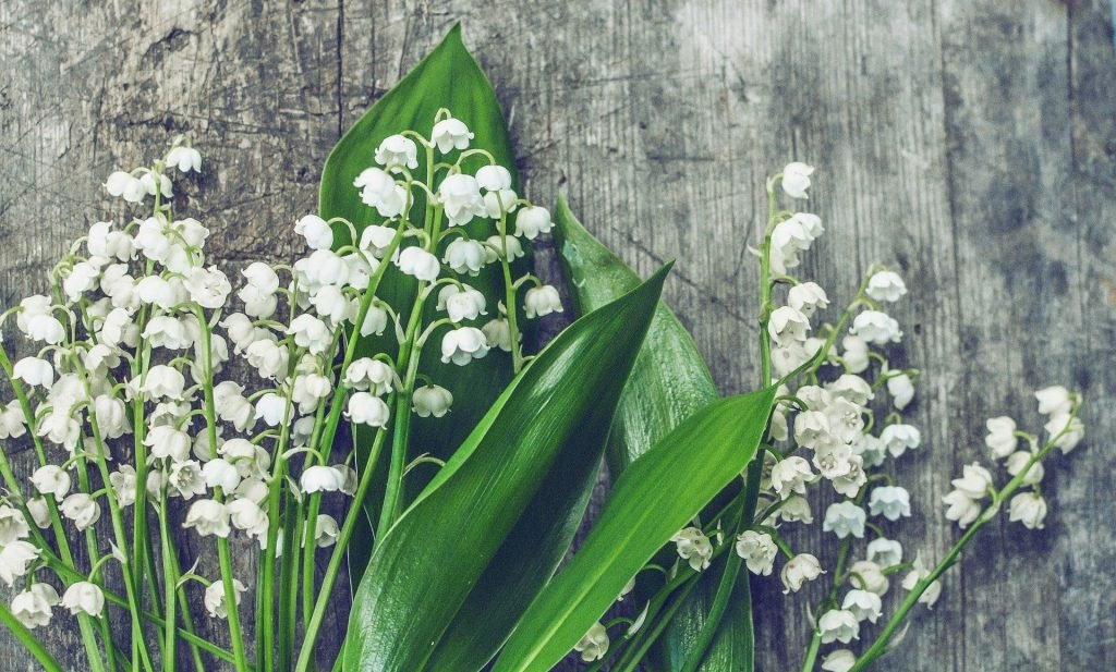 Lily of the Valley Birthday Flowers for May
