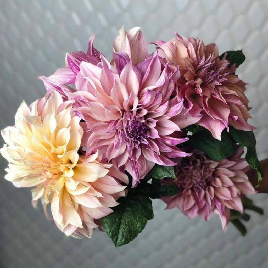 poppy and pine Denver Flower Shop