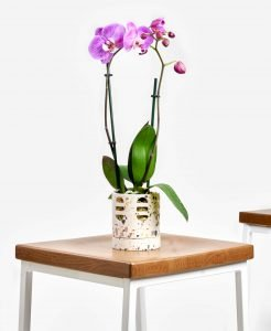Bloomscape Orchid Delivery NYC