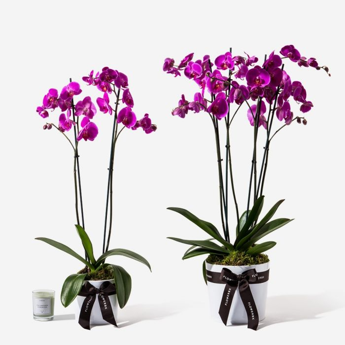 FLOWERBX Orchid Delivery New York City