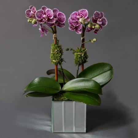 Gabriela Wakeham Orchid Delivery New York City