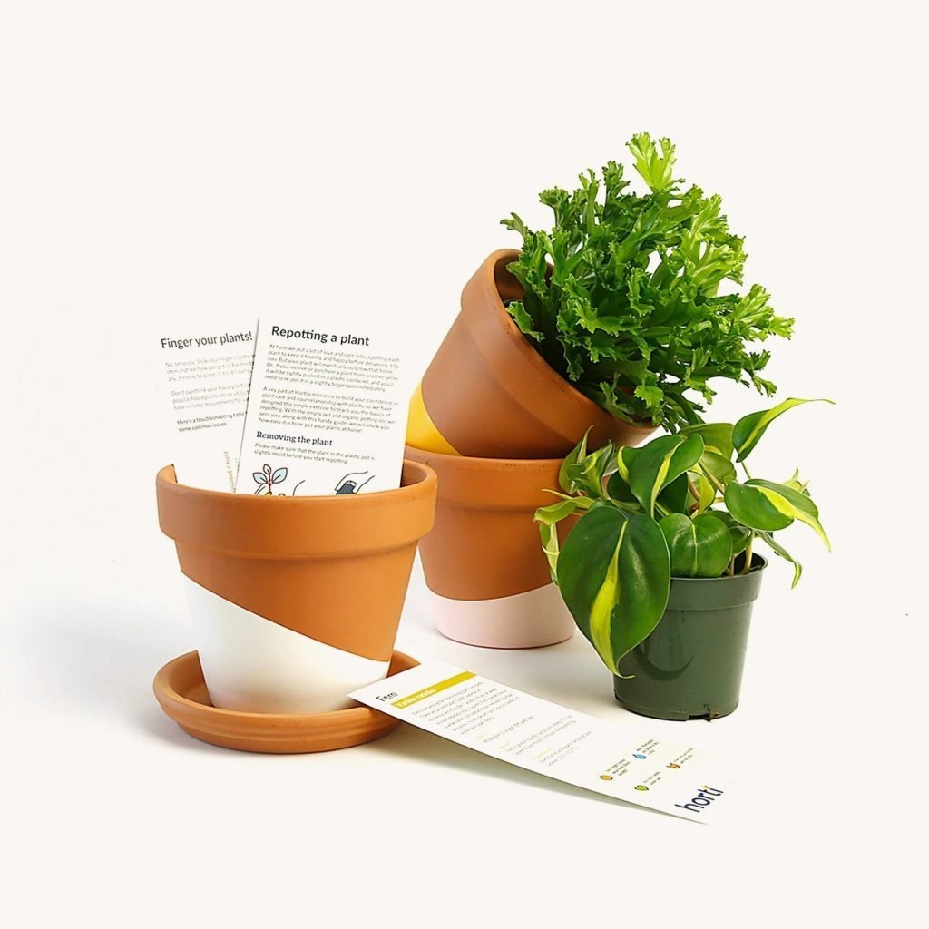 Horti-Plant-Subscription-New-York-City