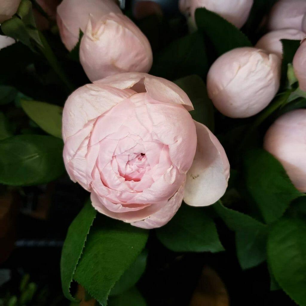 Riley's Florist Flower Delivery St. Louis