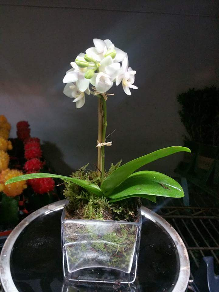 Tropical Plants & Orchids Delivery in NYC