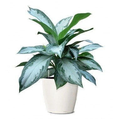 Tropical Plants & Orchids Plant Delivery NYC