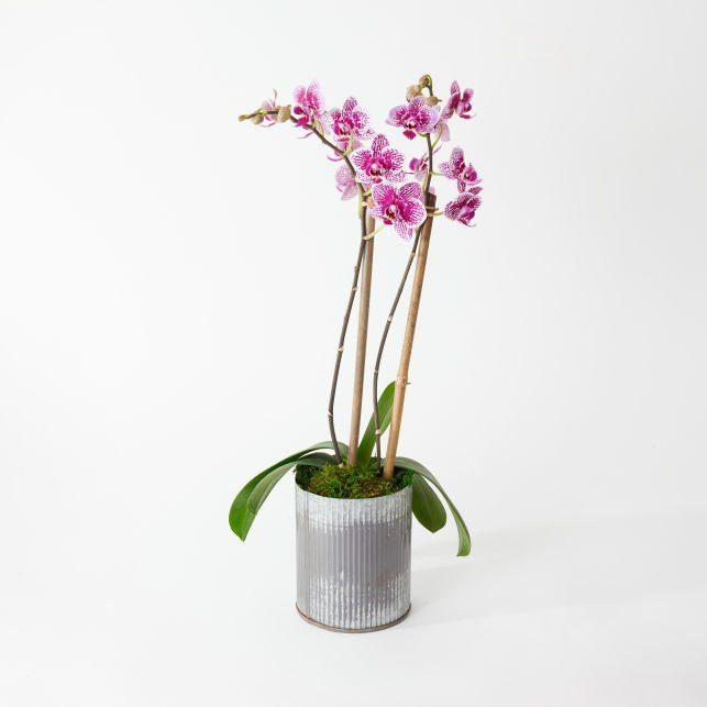 UrbanStems Orchid Delivery NYC