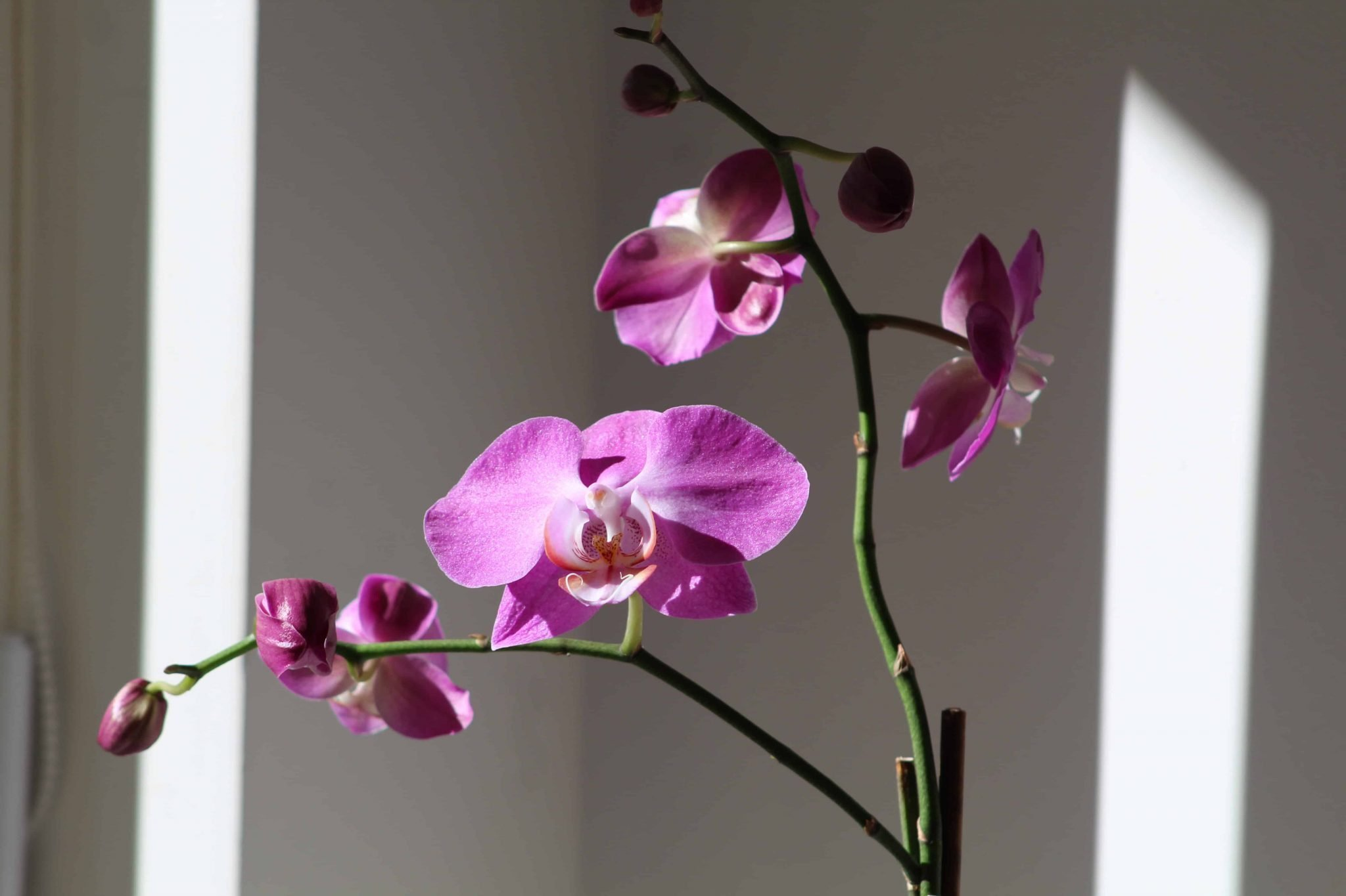 Best Orchid Delivery New York City