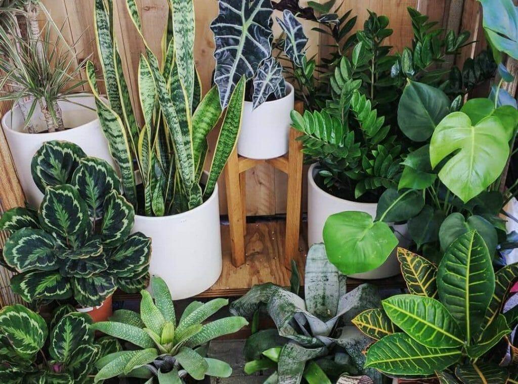 Artemisia Nursery Los Angeles