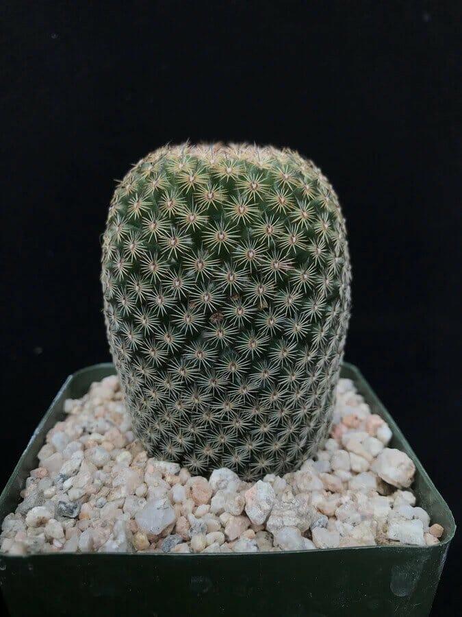 Cactus-Store-Los-Angeles