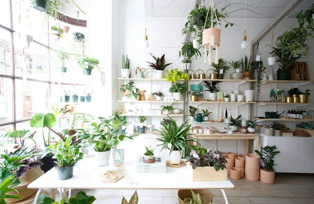 Folia Collective Plant Delivery Los Angeles