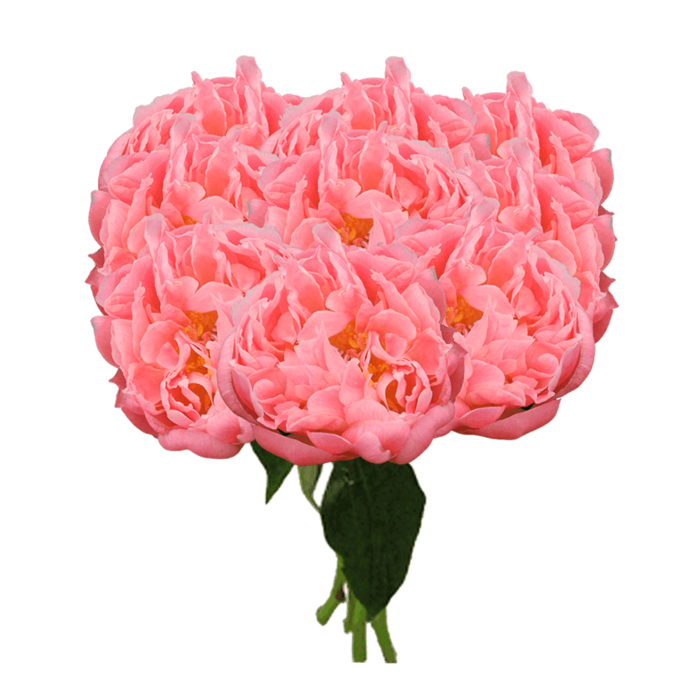 Global Rose Coral Peonies Delivery New York City