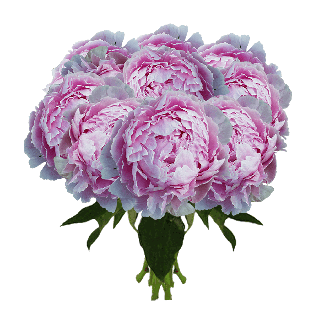Global Rose Pink Peonies Delivery New York City