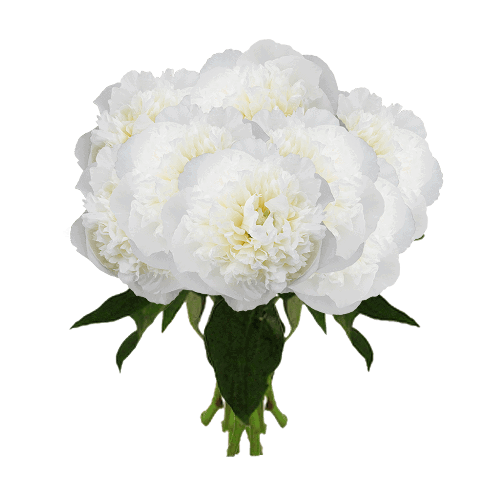 Global Rose White Peonies Delivery New York City