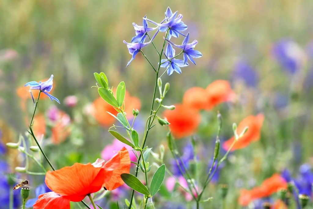 Larkspur Official July Birth Flower