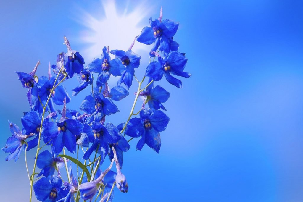 Larkspur Offiical July Birth Flower