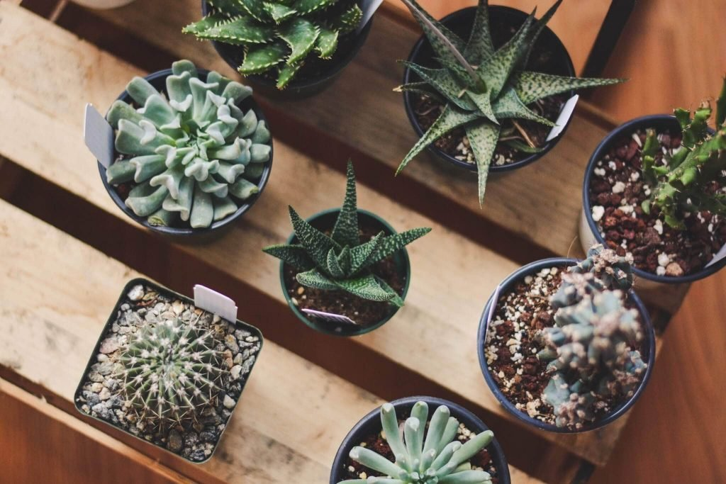 Plant Shop Chicago