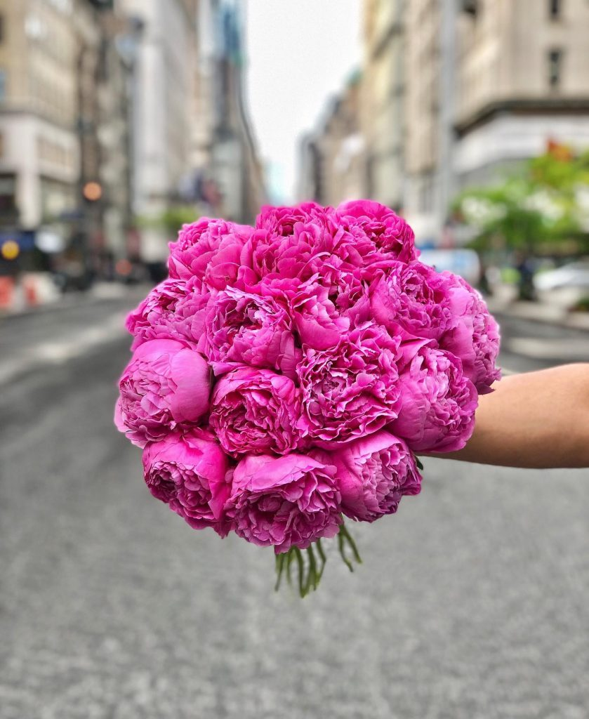 Scotts Flowers NYC Same Day Manhattan Peony Delivery
